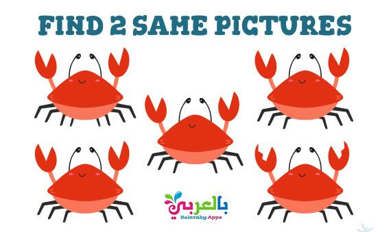 تحميل لعبة الصور المتشابهة للاطفال PDF .. انشطة تنمية الذكاء للاطفال 7 سنوات