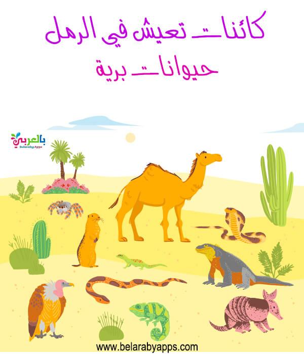 الكائنات في الرمل .. درس الرمل رياض الاطفال
