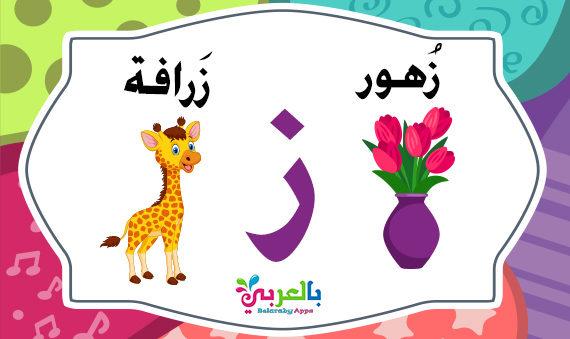 كلمات تبدأ بحرف الزاي ( ز ) - اسم حيوان نبات جماد بلاد بحرف ز
