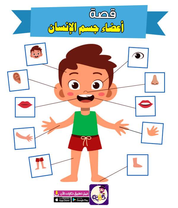 قصة عن أعضاء جسم الإنسان للاطفال