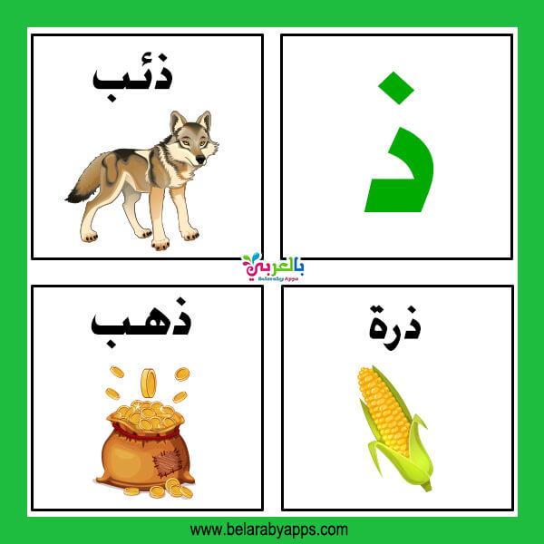 كلمات تبدأ بحرف الدال ( ذ ) – اسم حيوان نبات جماد بلاد بحرف ذ